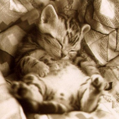 Sleeping_Kitten_in_Sepia_Wallpaper_uoohc